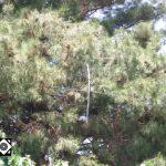 شاخه های درختان علت قطعی برق کمشچه/اداره برق هیچ  تذکری به شهرداری برای هرس درختان نداده است