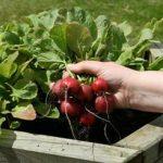 سبزیجاتی که مصرف آنها می تواند فشار خون بالا را کنترل کند
