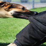حمله سگ به واکسیناتور دامپزشکی برخوار حین واکسیناسیون دامها در شهرستان
