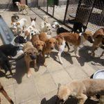 تکذیب خبر جمع آوری سگهای خانگی در شاهین شهر