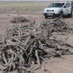 بیش از دو تن چوب و یک تن ذغا ل بلوط در شهرستان برخوار کشف شد.